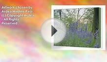 Canvas Artwork of A native British bluebell woodland at